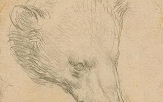 达·芬奇《熊的头部》7月伦敦拍卖   一周艺事