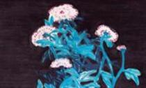 在《静月莹菊》中 常玉为何用孔雀蓝描绘枝叶