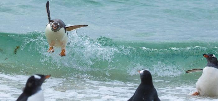 看了这些搞笑动物摄影 你需要更加珍爱野生动物